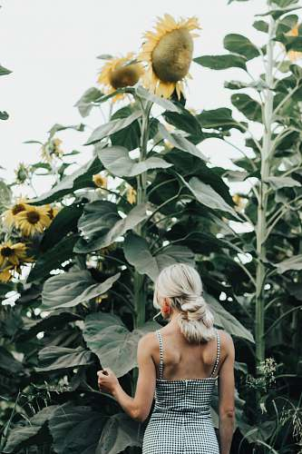 person woman standing by sunflower field people