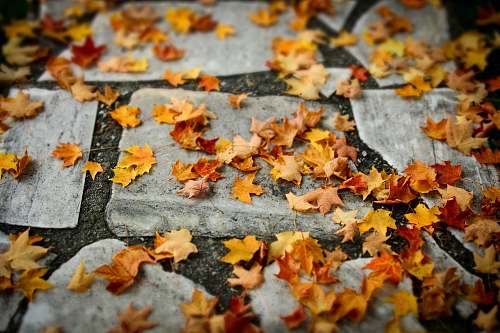 pavement autumn leaves on ground path
