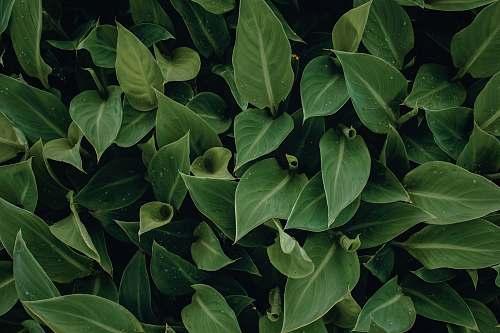 plant green leafed plant flora