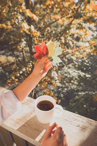 autumn person holding maple leaf near coffee cup coffee