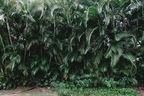 fern green palm plants during daytime flora