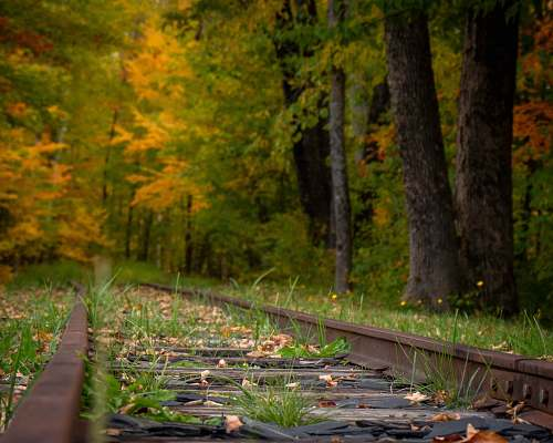 united states train track surrounded by trees boardwalk