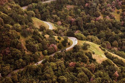 california aerial photography of concrete road in forest forest