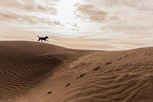 outdoors black 4-legged animal running on brown mountain under white cloudy sky desert