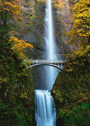 waterfall bridge in between trees multnomah falls