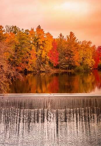 plant dam among autumn color trees tree