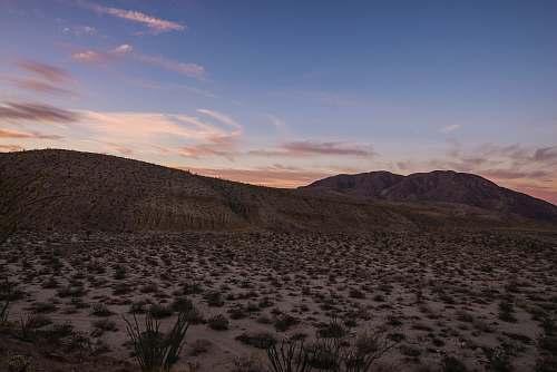 outdoors desert with green grasses desert