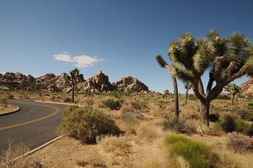 road empty road near tree desert