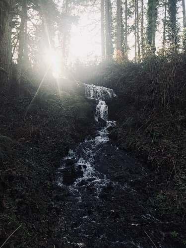 flare flower stream in forest during daytime light