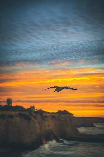 dawn flying bird under golden hour dusk