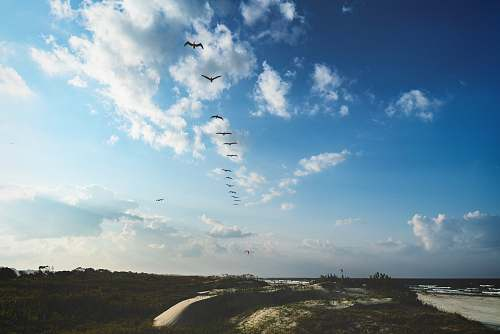 sky flying birds during daytime cloud