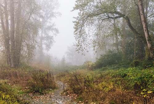 fog foggy forest mist