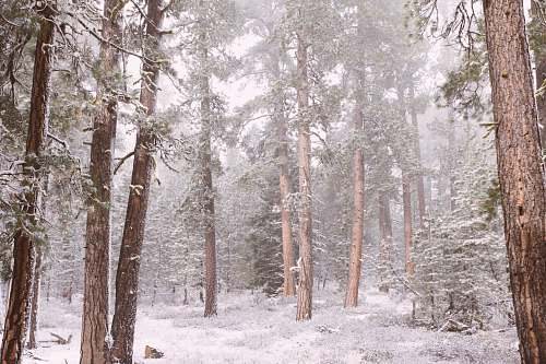 outdoors forest during winter snow