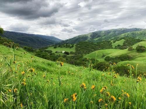 outdoors green grass field mountain scenery field