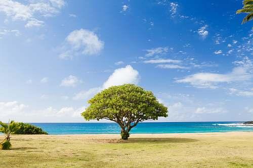 ocean green leaf tree on shore tree