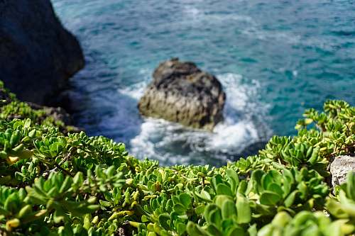 sea green leafed plants on mountain and body of water during daytime water