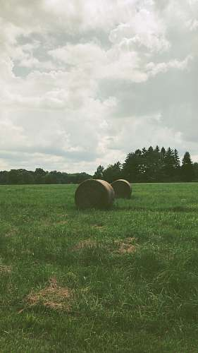 outdoors hay rolls on grass during day field