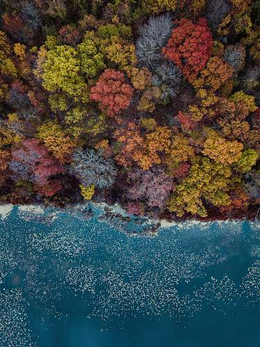 water high-angle photography of assorted-colored trees during daytime ocean