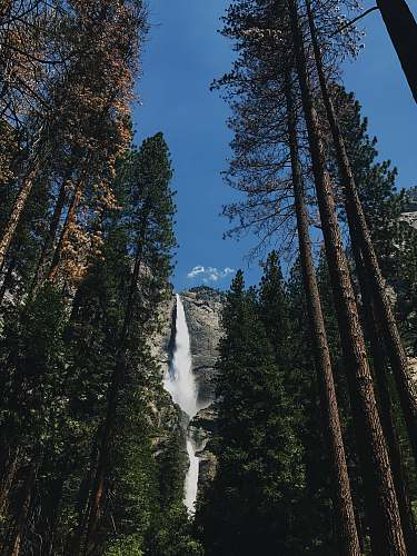 tree low-angle photography of waterfall and trees forest