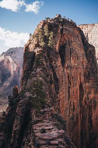 canyon trees on cliff mountain