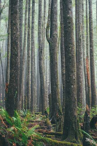 tree trees on forest forest