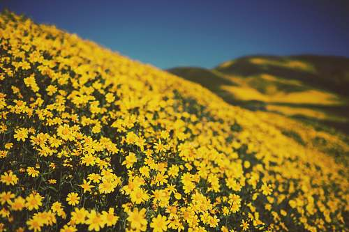 outdoors yellow petaled flower field during daytime field