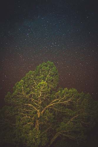 astronomy green leaf tree outdoors