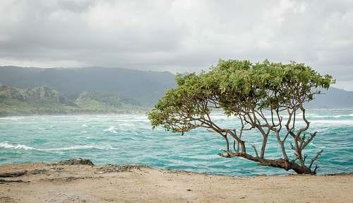beach green tree near seashore coast