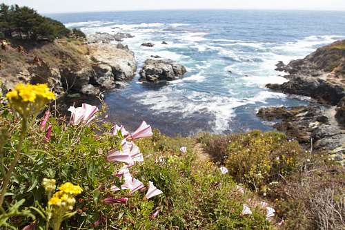 flower top view of rock formations and ocean coast