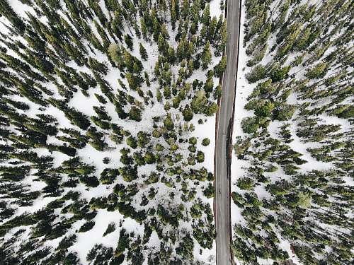 snow aerial photography of road and snow covered trees tree