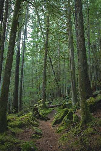 plant forest trees photograph vegetation