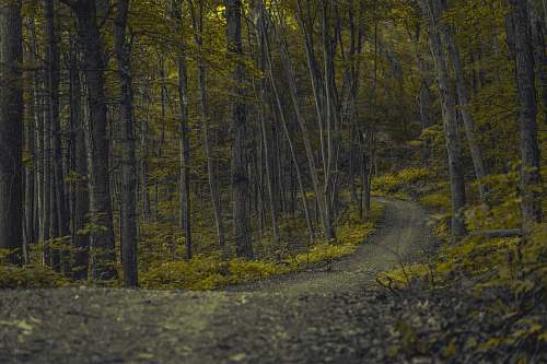 forest pathway surrounded with trees nature