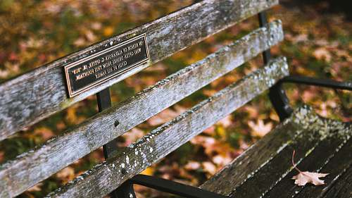 schenley drive brown wooden bench chair with signage pittsburgh