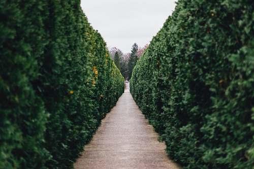 hedge grass maze pathway photo fence