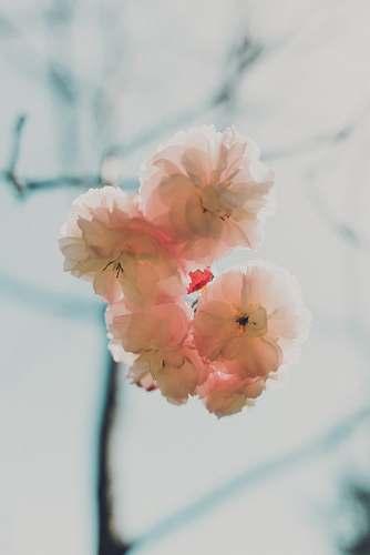 human white multi-petaled flowers on macro shot flower