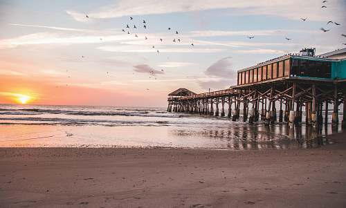 beach birds flying over brown wooden sea dock during sunset coast