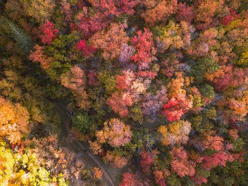 united states aerial photography of multicolored flower trees forest