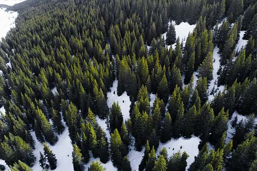 tree aerial view of forest during day time conifer