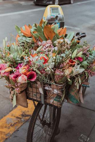 flora assorted-color flowers in bike basket jar