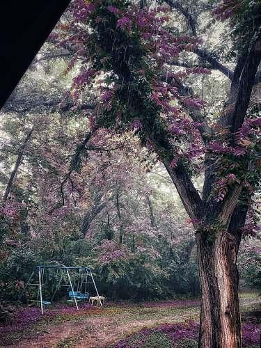 blossom blue metal swing near trees flower