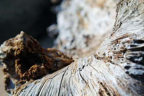 wood brown and white wood log tree