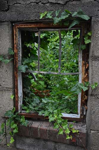 ivy brown wooden window framed with vines cranbrook private school