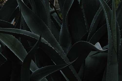 flora closeup photo of Aloe vera plant aloe