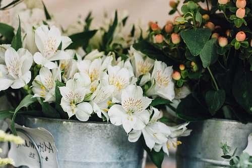 flower flowers in bucket flower arrangement