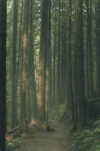 vegetation forest during daytime forest