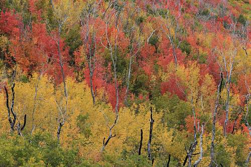 birch green, brown, and orange leafed trees flora