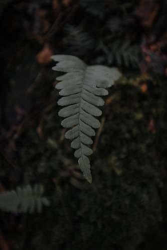 fern green leaf shallow focus photography flora