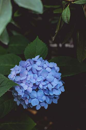 flower green leafed plant with purple flowers blue