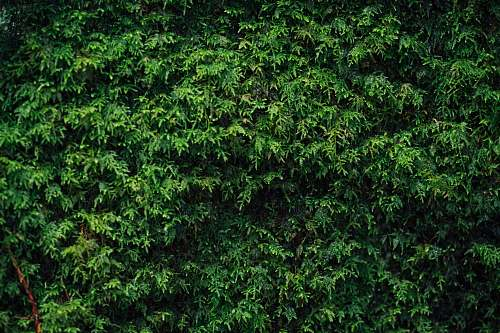 photo moss green-leafed tree bush free for commercial use images