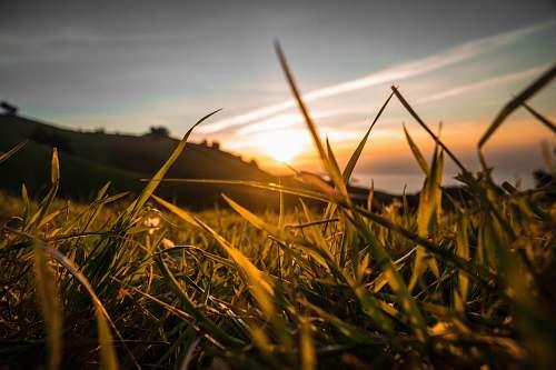 grass green plant during sunset flora